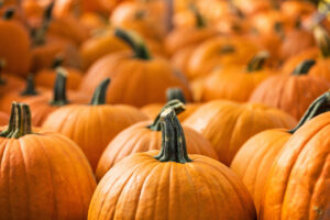 A large assortment of pumpkins and their stems